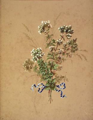 Origanum vulgare, Oreganoa